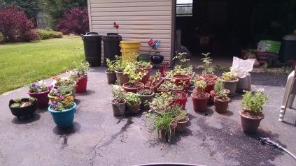 driveway-garden