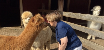 Author Kissing Ginger aka Charlie the Alpaca