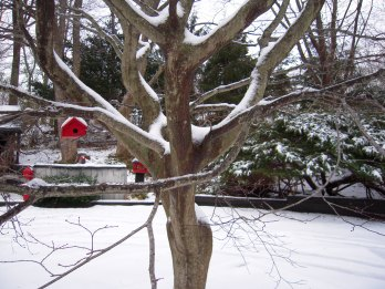 Red BirdHouse in Tree