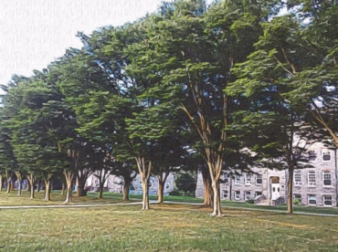 Trees along the University of RI Quadrangle