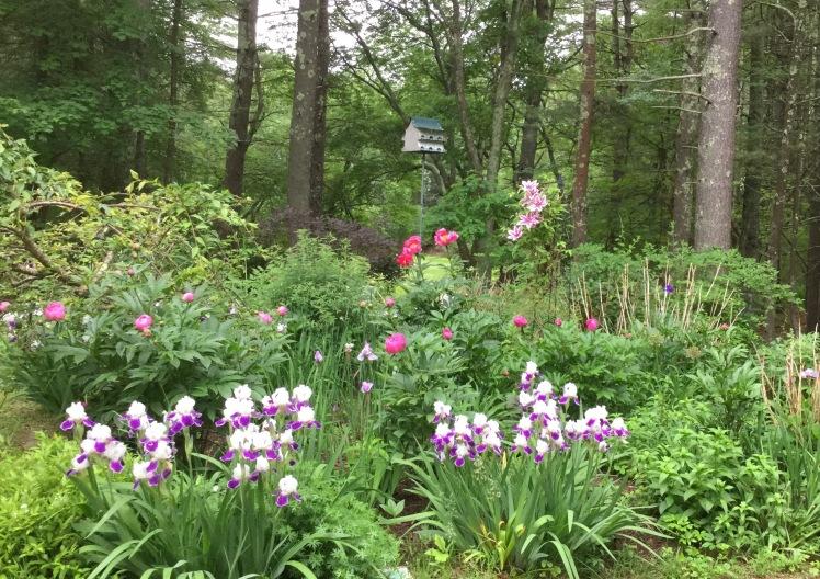Billy's Garden