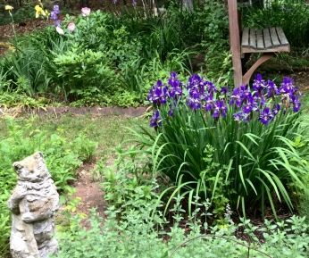 Garden Cat & Purple Flag Irises