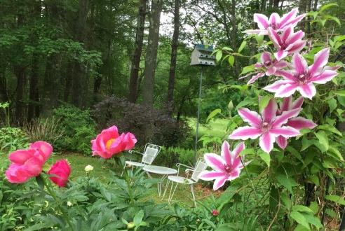 Pink Peonies & Clematis