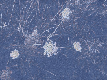 Queen Anne's Lace apped