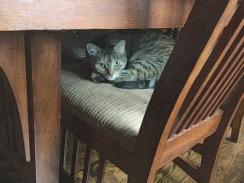 ZuZu Under Table