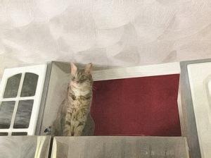 Refrigerator Cat Magnet
