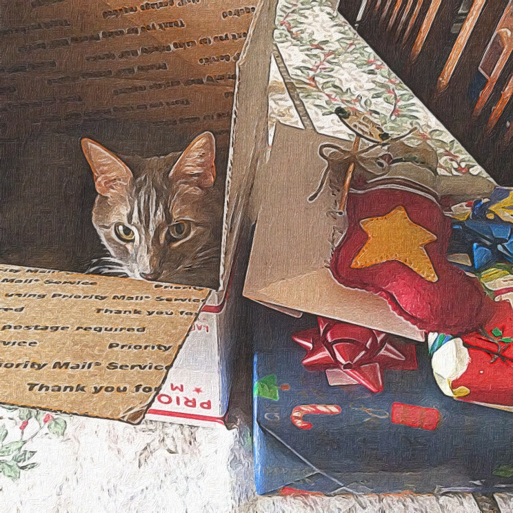 Roxie in the box