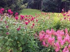 French Garden in Pink
